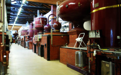 From vine to glass of cognac – PRIVATE Day tour from Bordeaux
